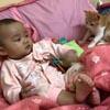 чихнувший малыш напугал котёнка