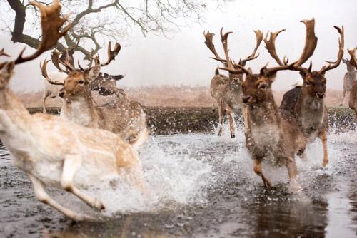 удачная съёмка оленей