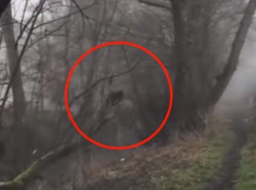 призрак гулял вдоль реки