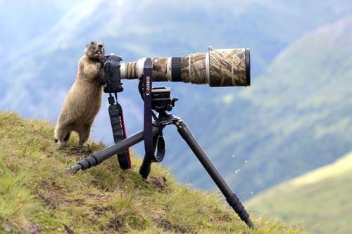 сурок решил стать фотографом