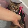 ленивый кот во время гидротерапии