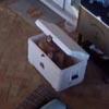 мальчик спрятался в холодильнике