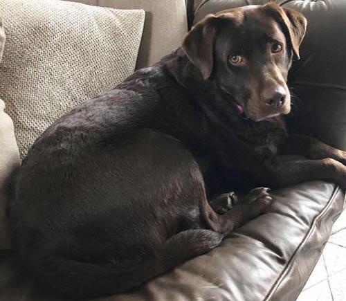 потерявшаяся собака нашлась