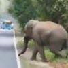 слон рассердился на людей