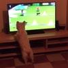 собачьи спортивные соревнования