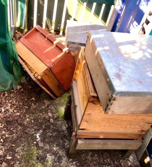 грабителя наказали злые пчёлы
