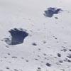 следы бигфута в снегу