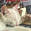 бездомный котёнок на животе