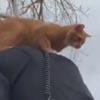 кот на спине у полицейского