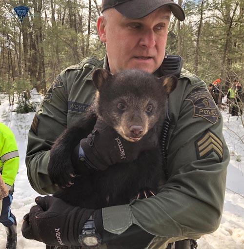 медведи поселились на дороге