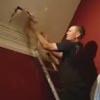 собака застряла в стене дома