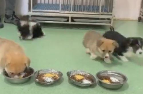 щенки выпали из клетки