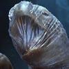 опасность загрязнения океана