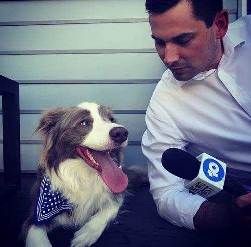 пёс лишил репортёра микрофона