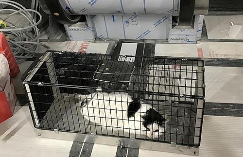 семья кошек под эскалатором