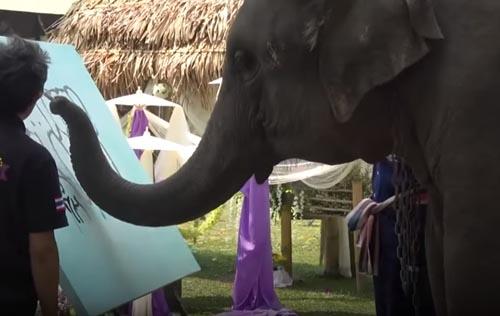 слониха любит живопись