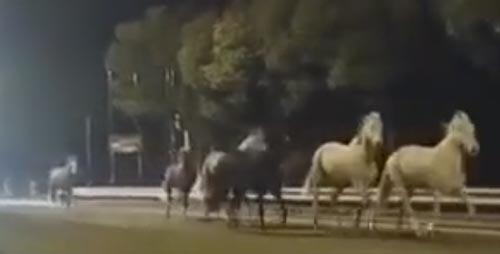 лошади убежали из конюшни
