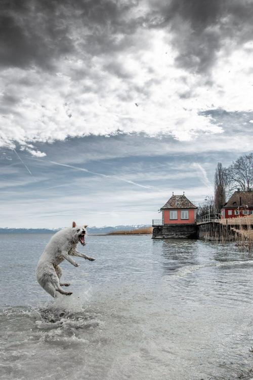 пёс танцует в воде
