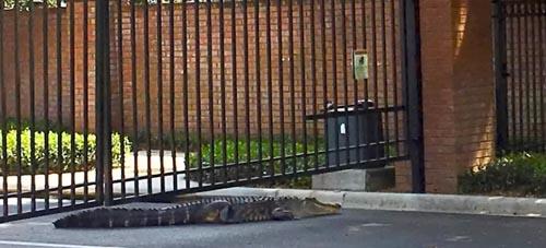 аллигатор на остановке автобуса