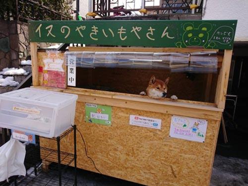 собака торгует картофелем