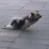 бездомная собака-инвалид