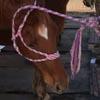 лошадь освобождается из плена