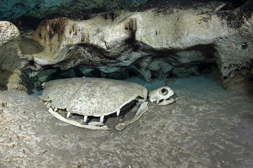 подводное черепашье кладбище