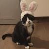 кошка превратилась в кролика