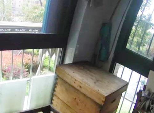 разведение пчёл на балконе