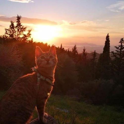 путешествие в компании с кошкой