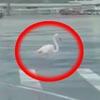 фламинго прилетел в аэропорт