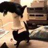 котёнок напугал взрослого кота