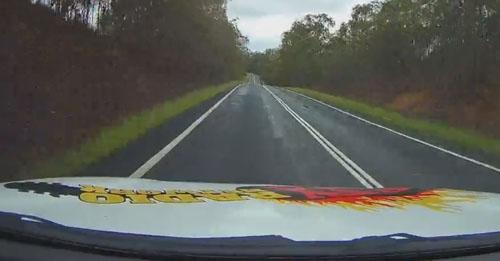 кенгуру выскочил на дорогу
