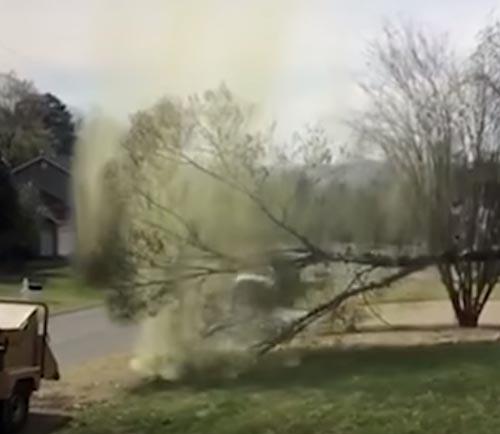 облако пыльцы от дерева