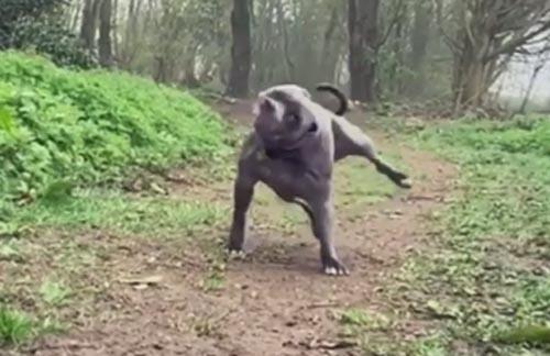 собака трясётся на бегу
