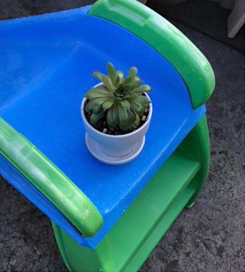 комнатные растения стали внуками