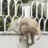 собака и закрытые ворота