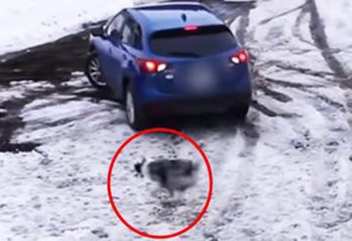 собака спасла подругу