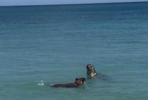 собака и морской лев