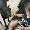 малышка дразнит собаку печеньем