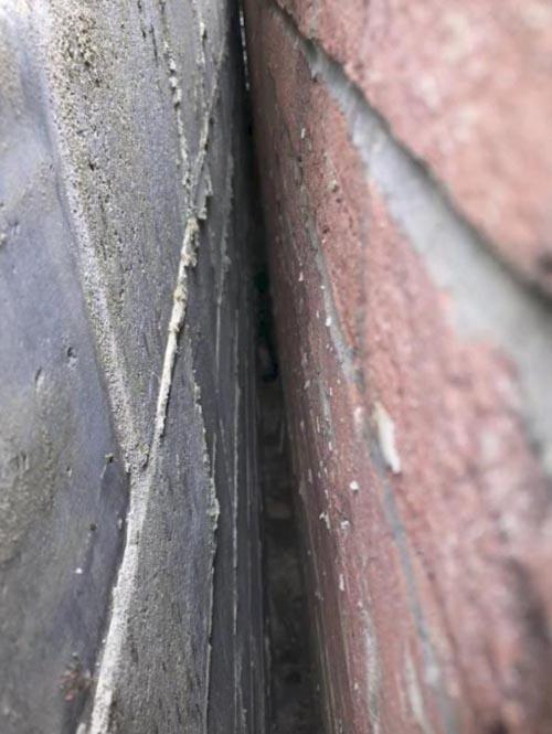 кошка застряла между стенами