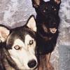 собаки порвали мешок с бобами
