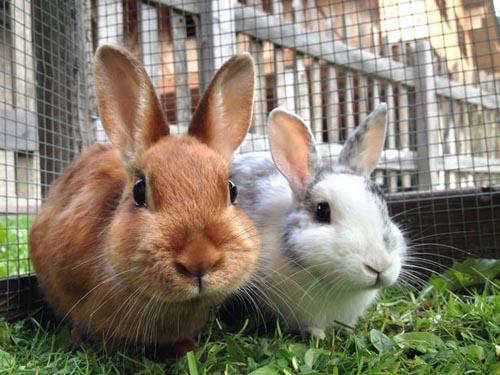 кролики на детской фотографии