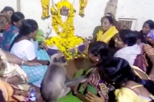 обезьяна приходит на похороны