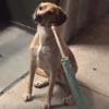 пёс возле закрытого зоомагазина