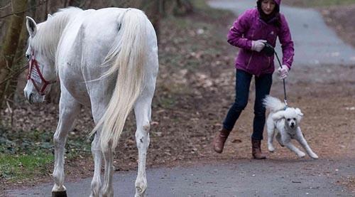 лошадь одна ходит гулять
