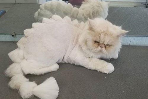 кошки превращаются в динозавров
