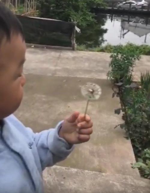 малыш не справился с одуванчиком