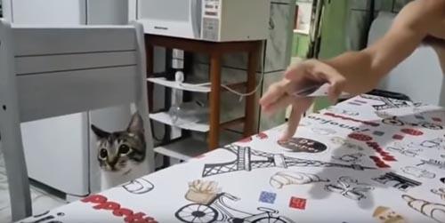 реакция кошки на фокус