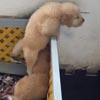 умный щенок сбежал из вольера